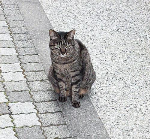 メゾンドネコ が始まるきっかけとなった猫のトト